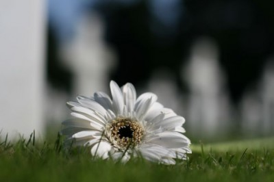 cimiterofiore