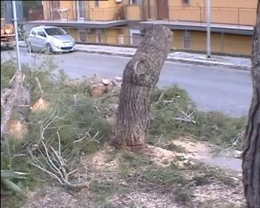 alberi.avi.Immagine002