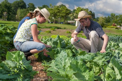 Young urban farmers working on a city market garden in Toronto.