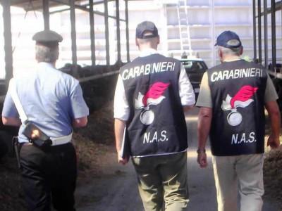 carabinieri-nas-latte-mucche