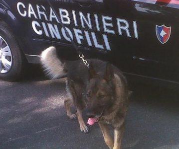 carabinieri_cinofili