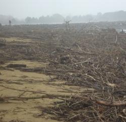 legni-spiaggiati