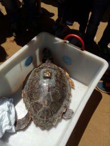 La tartaruga geolocalizzata