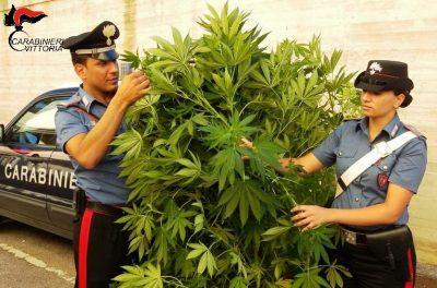 Chiaramonte Gulfi (RG) Carabinieri sequestro marijuana