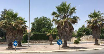 Le palme in via Fieramosca
